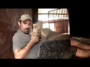 Kevin Richardson, a very special Lioness, her Cubs