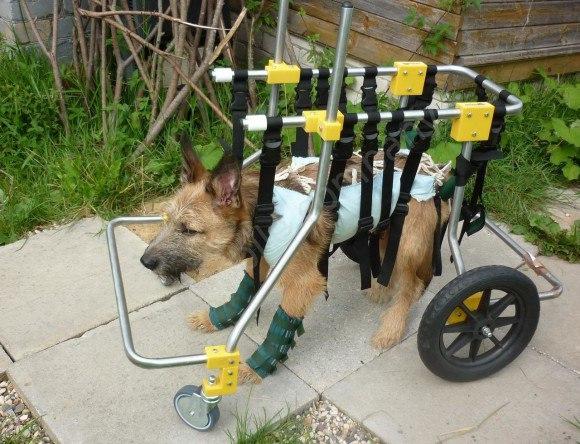 гамма как изготовить коляску тележку для собак кошек своей задачей справляется