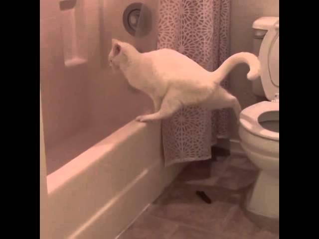 Кот промахнулся ... немножко. Курьезный случай с котом в туалете.