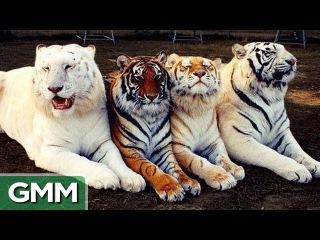 Bizarre Animal Hybrids | Необычные гибриды животных