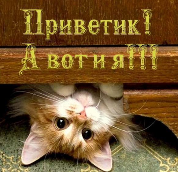 http://cs624122.vk.me/v624122610/26c30/rOZjsubOQ84.jpg