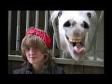 Фотобомбы с Животными - Лучшее