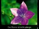 Немецкий язык. Урок 3. Прилагательные.