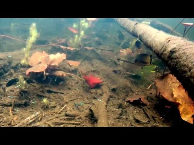 Nature's aquarium : the planted igarape