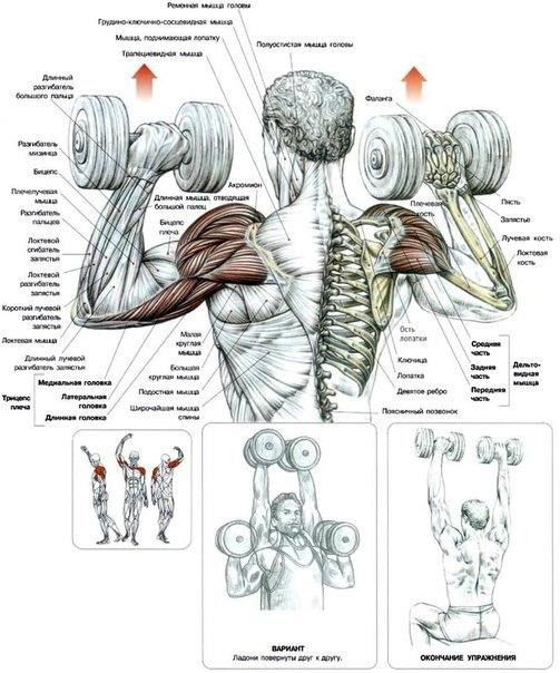 Как накачать руки плечи