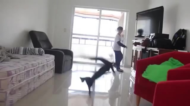 why do female cats spray inside