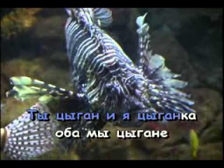 Караоке ► Русские Песни ♫ Цыганочка ♫ Karaoke