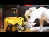 LEGO Mindstorms EV3 Robot &amp a little dog (Wall-e &amp MARU) teaser by