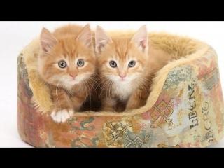 Два Котёнка - Детская песня !