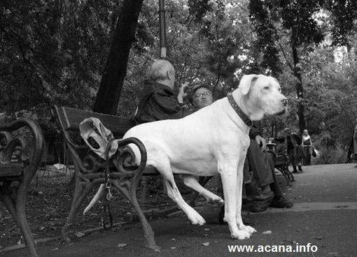 корм для собак и кошек royal canin