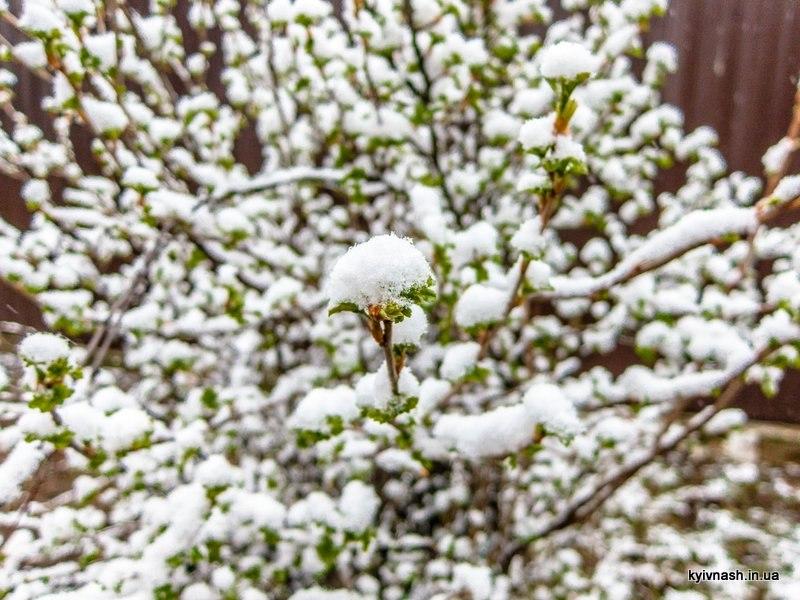 Киев Март Снег