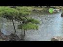 Kyu-Shiba-rikyu Gardens - Machi-log