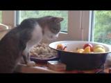 Мой кот Барсик ест перчик.