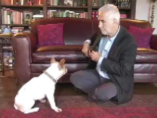 Dog Training - Quantum Leap 1: Phase Out Food Lures