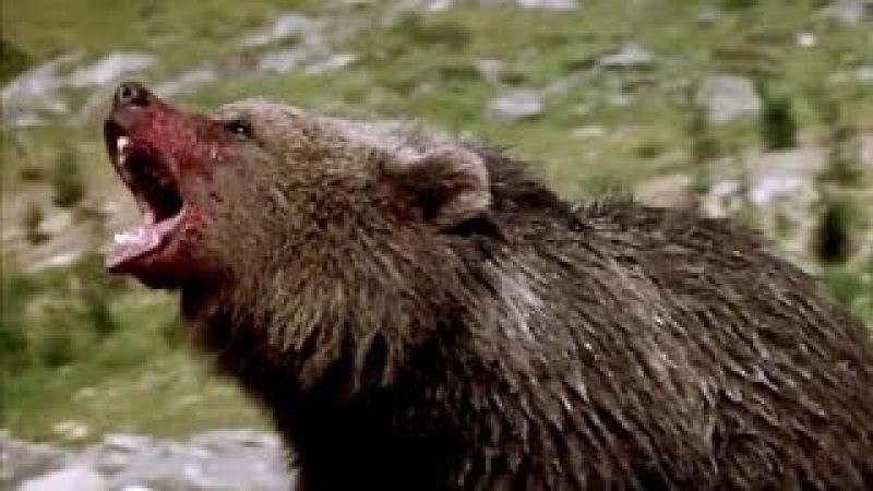 The Bear vs Puma - Beautiful Music Video HD