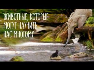 Животные, которые могут научить нас многому