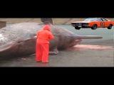 Как взрываются киты