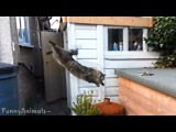 Funny Videos - Best Funny Cats Video - Funny Cat Fails Compilation