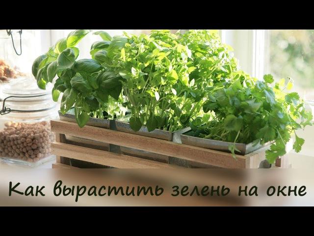 Как вырастить зелень на окне ❤ Cooking with Love