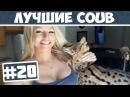 Лучшее в Coub #20 Повторяй за котом