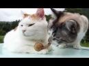 Кот, познавший дзен, и бесстрашная улитка