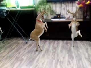 Танцующие олени. Мегаприкол!