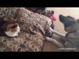 Как собаки реагируют на то, что кошки занимают их место