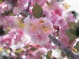 ERNESTO CORTAZAR- La vie en rose