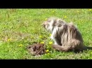 Cat and mole funny