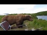 Подборка приколов про медведей за 2015 год.Смешное видео. 18р+.  смотреть приколы