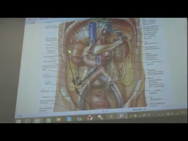 Причины опущения кишечника. Фиброз и спайки брюшины.