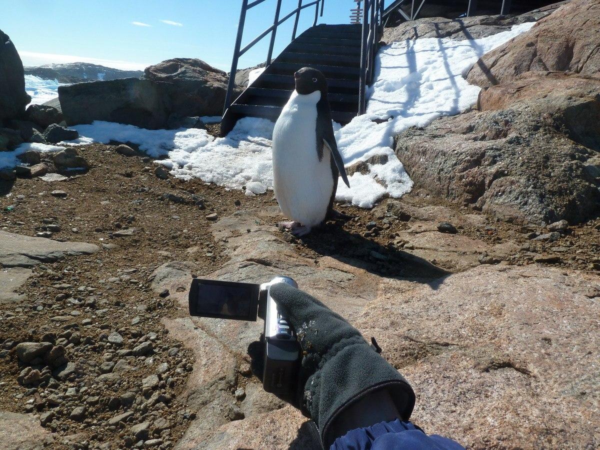 Первый пингвин на нашей стацнии!