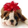 Royal-Pets.ru Элитные домашние животные