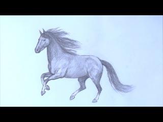 Уроки рисования. Как научиться рисовать лошадь карандашом