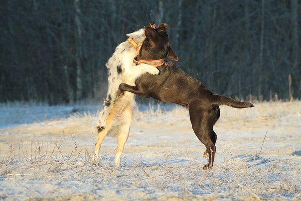 Marrandi Dance Winter & просто Шкода VBAu9vQNqgk