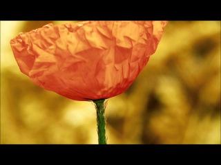 Twameva Mata . by Sudha & Maneesh De Moor HD 1080p