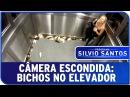 Câmera Escondida Bichos no Elevador