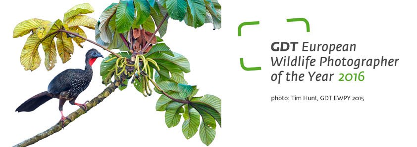 GDT European Wildlife Photographer of the Year 2016 | PhotoArt