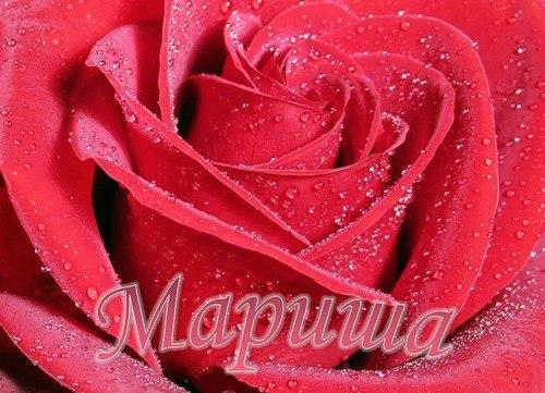 Картинки цветы марине