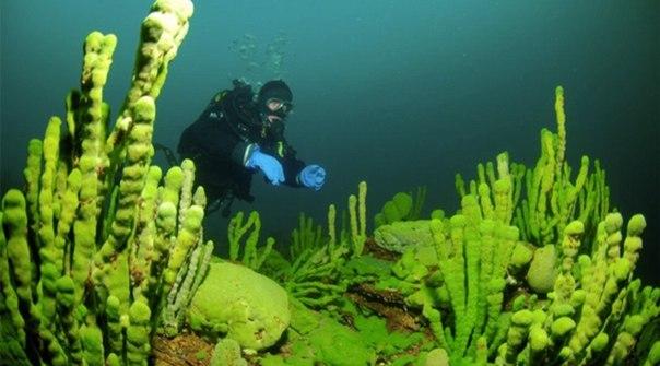 (#байкал #водоросли #зеленые