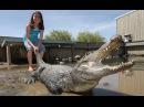 Масштабное унижение аллигаторов