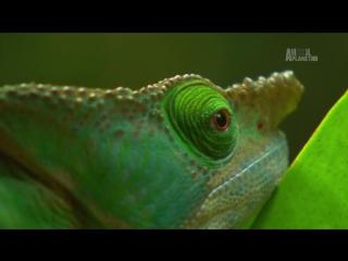 В дебрях Африки 07 Мадагаскар - Остров чудовищ