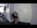 Кот открывает собаке дверь