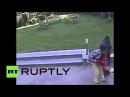 Собака (овчарка) без причины напала на ребенка в парке, Индия