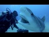 Petting A Tiger Shark
