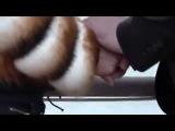 Namiq Qaracuxurlu - Olurem yar klip  yeni 2014