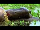 National Geographic - İnsan yiyen yılanlar HD