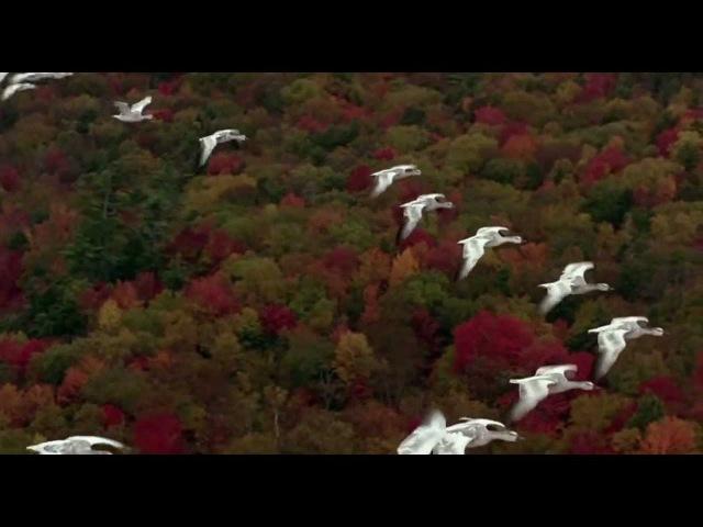 Перелетные Птицы - Обещание вернуться