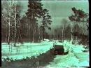 Лесная сказка. История Новосибирского Академгородка.