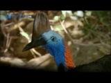 ����� ������� ���������   �������   �������������� �����,Wildlife Australia Jungle Documentary